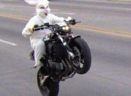 Bunny Wheelie1 450x330 - Happy Easter!