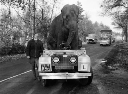 """Kam"""" an elephant from Bertram Mills circus """"drives"""" a Land Rover November 1959 450x330 - Kam the Elephant and his Land Rover"""