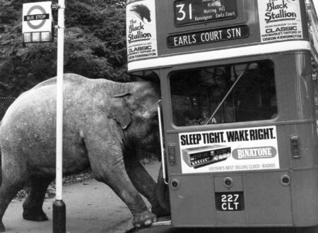 One of David Smarts elephants boards the bus to Earls Court. Photo by Colin DaveyEvening StandardGetty Images. 16th July 1980 450x330 - Earl's Court Elephant