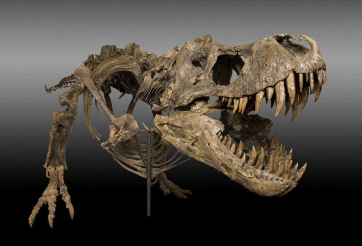 T-Rex Skeleton High Resolution
