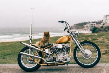 Dog on Motorcycle