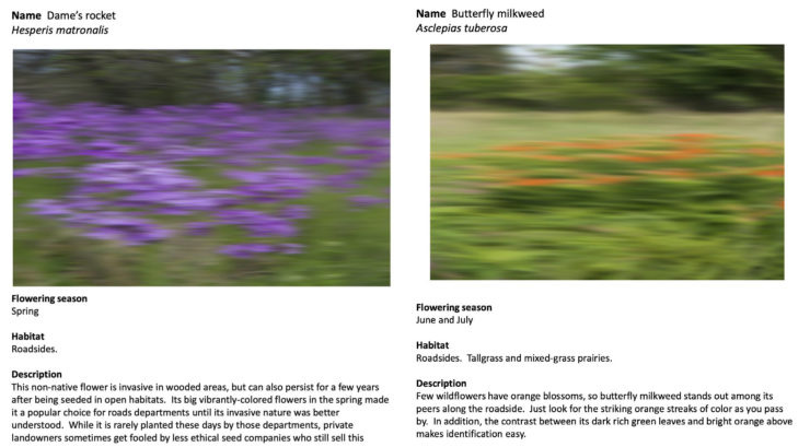 A Field Guide to Roadside Wildflowers At Full Speed Collage 2