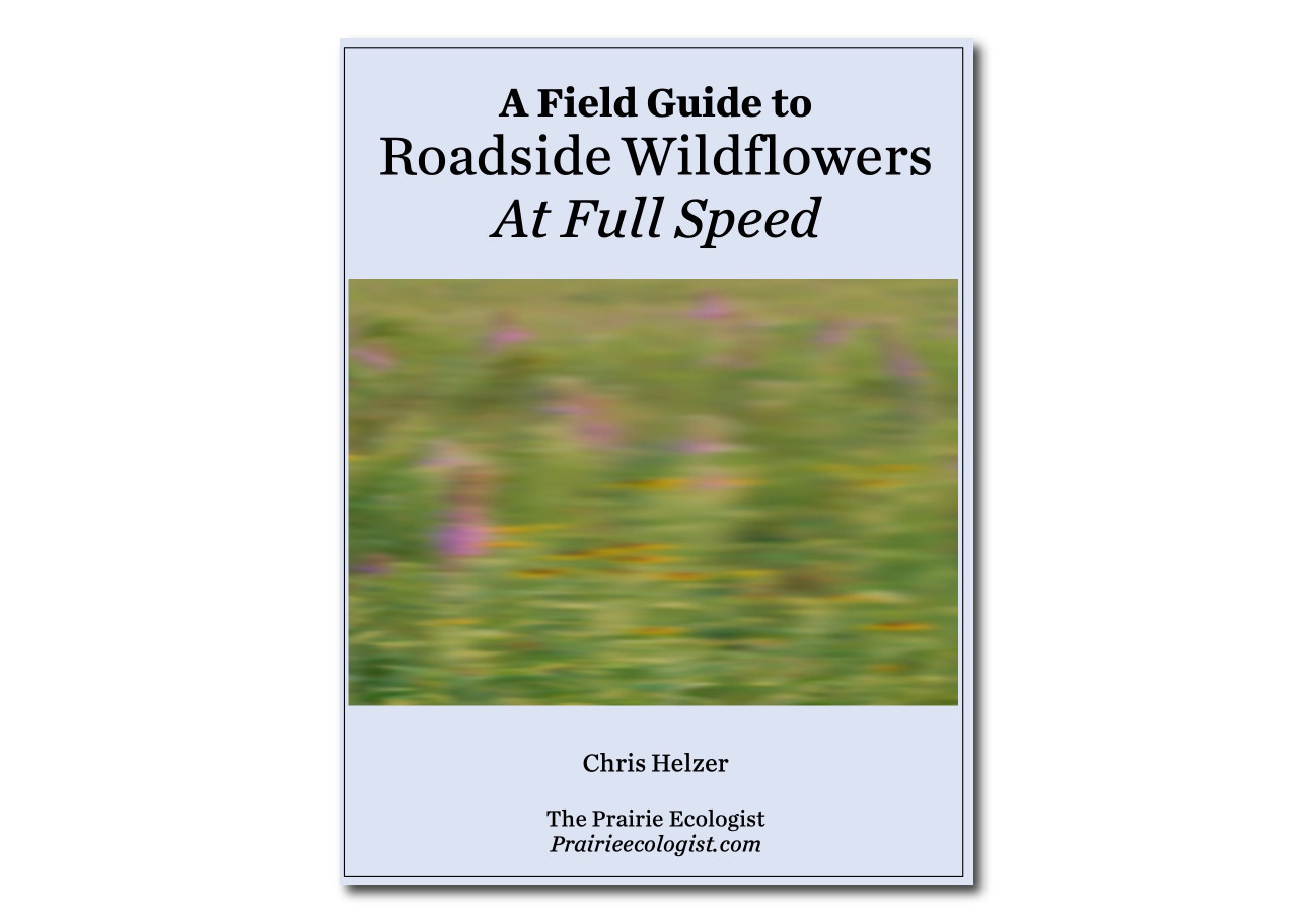 A Field Guide to Roadside Wildflowers At Full Speed